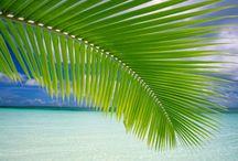Doğada simetri / Altın oran ve simetri canlılar dünyasının en harika özelliklerindendir.