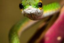Breathtaking Reptiles