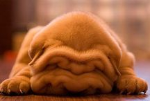 Awwww! / Happy-inducing pictures of living things