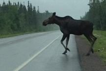 Duluth Wildlife