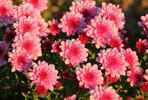 Kert, virágok, növények / Kerti és szobanövények leírása, gondozása. Képek, tippek, weboldalak.