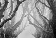 Black and white / Photos