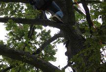Go-Climb-A-Tree