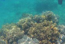 Snorkelling Sites