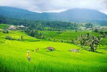 Jati Luwih Rice Terrace / the most beautiful Rice Terrace in Bali.