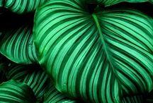 Grønne planter til haven