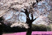 Setting - Medieval Japan