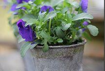 *The Garden House - Spring/Summer