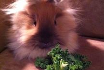 My Bunnies / by Lisa Swatsky