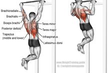 day 1 back exercise
