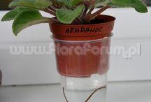 Rośliny-uprawa