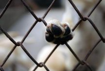 Sve o životinjama / Ako volite životinje i borite se za njihovo očuvanje, tada ste na pravom mjestu.