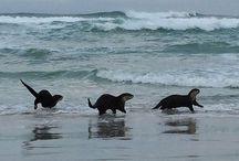 Otter Magic