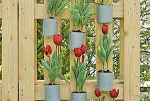 Tuin - bloemen