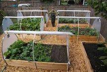 HOME: Backyard veggie gardens