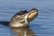 Everglades Tours / Miami Discount Everglades Tours and sightseeing attractions