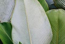 Leaves / Greenery, leaves, garden