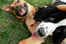 Dogs / food knowledge (dogs)