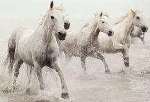horses / by Lynn Austin