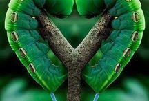Serce w naturze