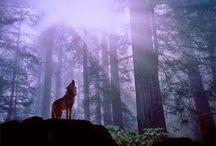 Geesteren / Wolven