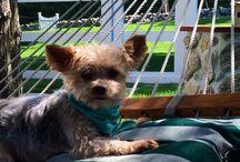 I Heart Pups ~ / Cute, fury, lovable pups!