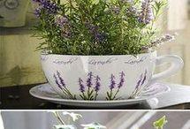 Indoor plants for sleepng
