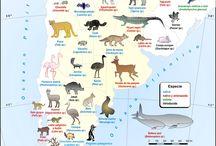 Info util / mapas, infografías, y toda la info para tu viaje por Argentina.
