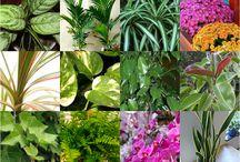 Floraterapia