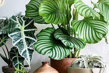 D - Plants
