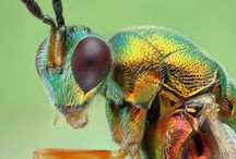 Insects / I like insects!!!