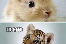 Animales cute