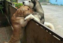 Amigos increíbles
