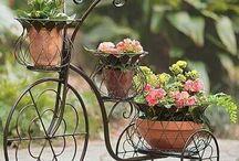 virágok, kert, lakás