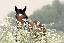 Horses, donkeys