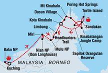 Malaiezia