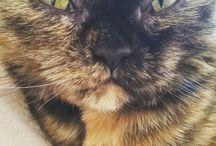 Cat Conya