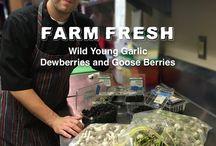 Farm Fresh & Foraged FOODS