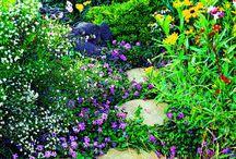 gardening / by Linda Slaughter