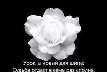 Стихи о любви (видео) / Видео стихи о любви и жизни