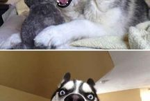 Funny/Gorgeous Animals