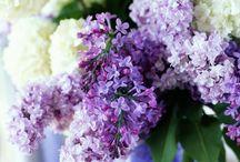 Planting blue/purple