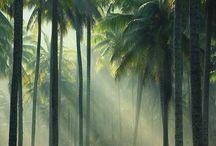 NATUR: Wald