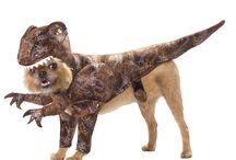 hund utkläddning