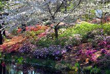 trees,- flowers,- lights,- colors
