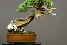 Bonsai / by Tyler Payne