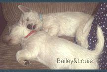 Bailey & Louie ❤