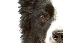 Pet Health and Client Education