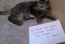 Cat Shaming / Cats that earned their spot on the wall of shame