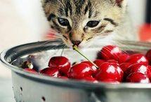 Cats & Cherries / by cheribundi